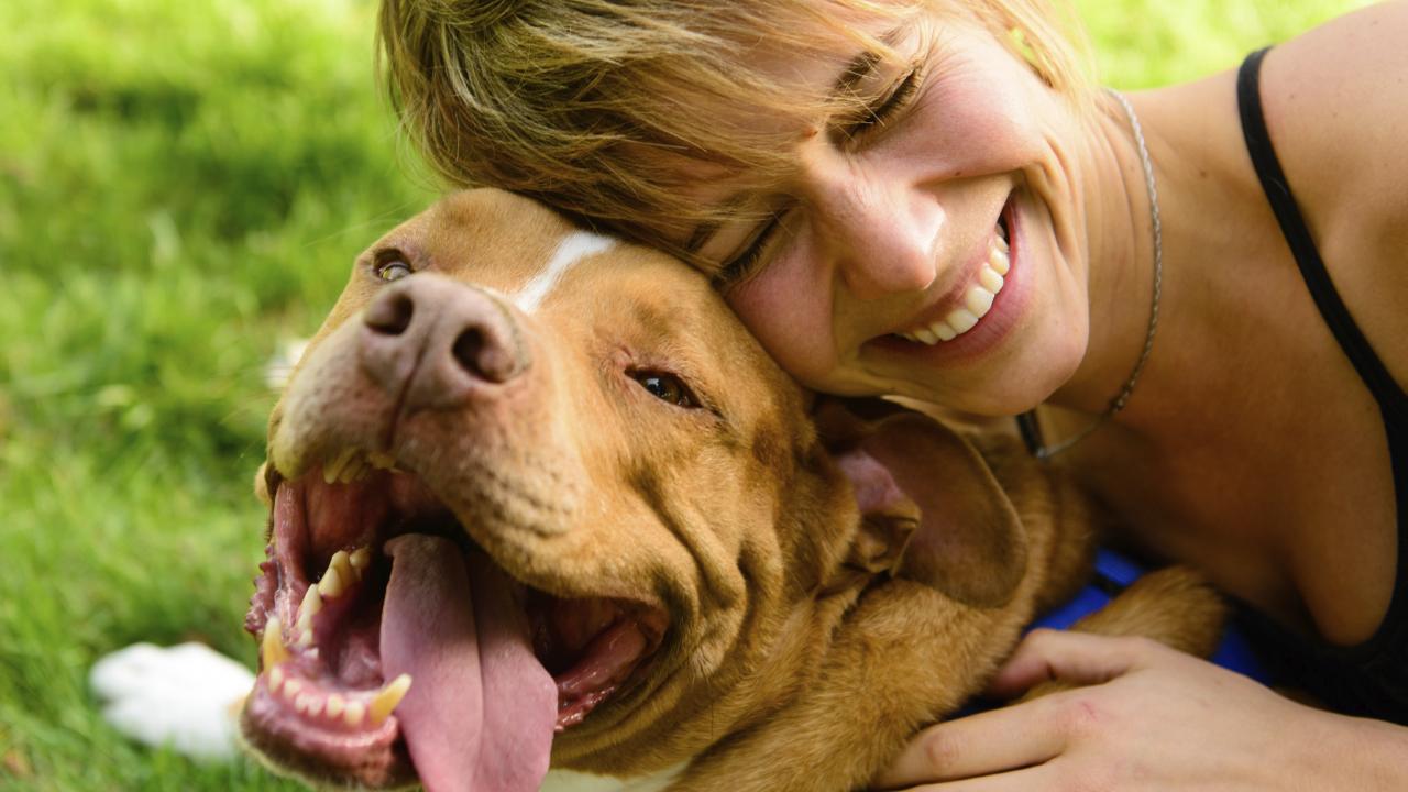 Eles são nossos melhores amigos, mas o contato intimo com cães e gatos criados com pouca higiene pode ser a principal causa de queda de cabelo em muitas pessoas.